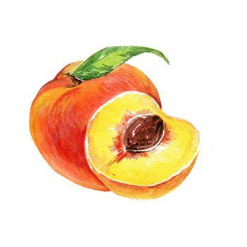 Watercolor Apricot. Hand Drawn Illustration Organic Food Vegetarian Ingredient