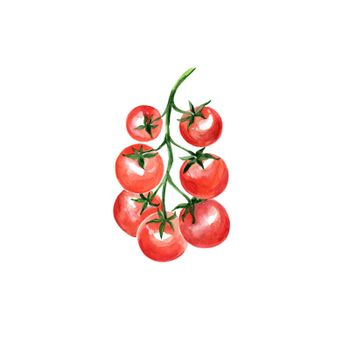 Watercolor Cherry Tomato. Hand Drawn Illustration Organic Food Vegetarian Ingredient