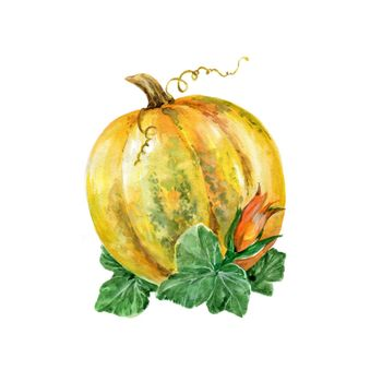 Watercolor Pumpkin. Hand Drawn Illustration Organic Food Vegetarian Ingredient