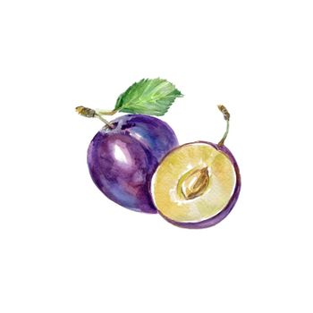 Watercolor Blue Plum. Hand Drawn Illustration Organic Food Vegetarian Ingredient