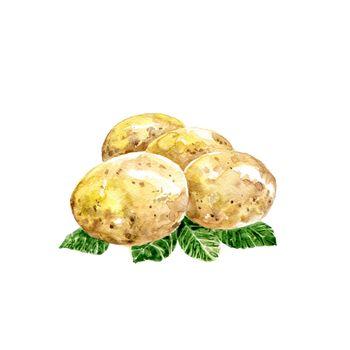Watercolor Potatoes. Hand Drawn Illustration Organic Food Vegetarian Ingredient