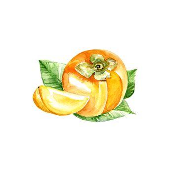 Watercolor Persimmon. Hand Drawn Illustration Organic Food Vegetarian Ingredient