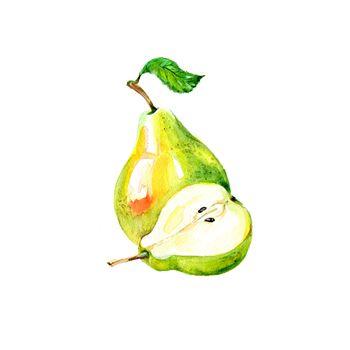 Watercolor Fresh Pear. Hand Drawn Illustration Organic Food Vegetarian Ingredient