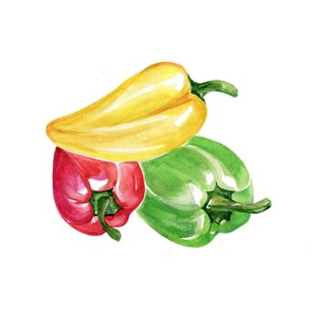 Watercolor Bell Peppers. Hand Drawn Illustration Organic Food Vegetarian Ingredient