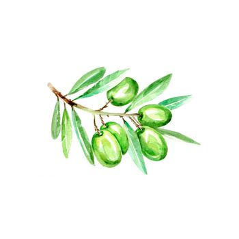 Watercolor Green Olives. Hand Drawn Illustration Organic Food Vegetarian Ingredient