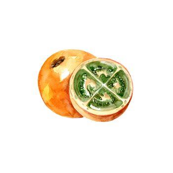 Watercolor Naranjilla. Hand Drawn Illustration Organic Food Vegetarian Ingredient
