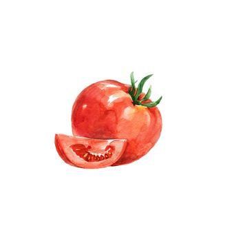 Watercolor Tomato. Hand Drawn Illustration Organic Food Vegetarian Ingredient