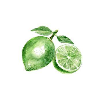 Watercolor Lime. Hand Drawn Illustration Organic Food Vegetarian Ingredient