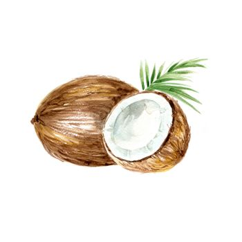 Watercolor Coconut. Hand Drawn Illustration Organic Food Vegetarian Ingredient