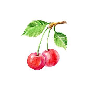 Watercolor Cherries on Branch. Hand Drawn Illustration Organic Food Vegetarian Ingredient