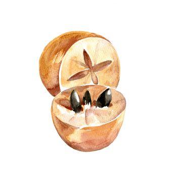 Watercolor Chico Zapote. Hand Drawn Illustration Organic Food Vegetarian Ingredient