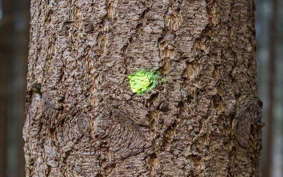Forestry industry tree felling, marked tree