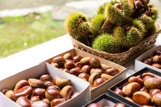 Chestnut for sell