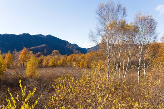 Senjogahara moor trail
