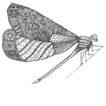 Dragonflie. Hand drawn graphic illustration in black and white and gray colors. Doodle image.