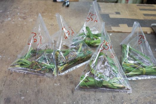 Grasshoppers in Bags Ready For Bird Feed