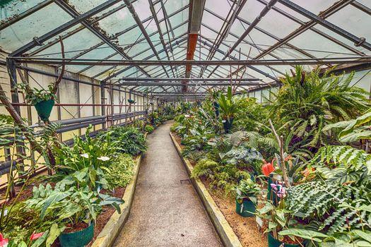 Botanic glasshouse building