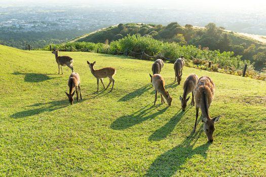 Deer at highland