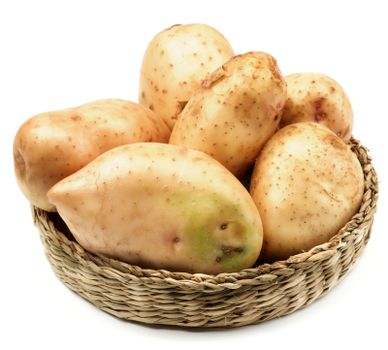 Big Raw New Harvest Golden Potato in Wicker Bowl isolated on White background
