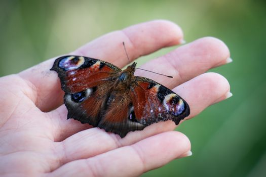 Colorful butterfly on a man's hand. Hand on grass background. Summer season.