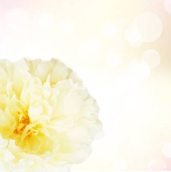 Pastel Flowers With Bokeh