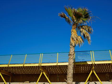 Palm coconut trees on a beautiful beach walkway
