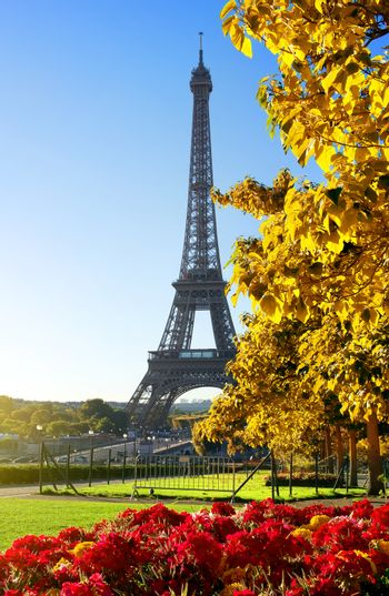Flower and Eiffel Tower in autumn