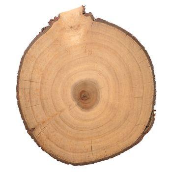 Wood log slice