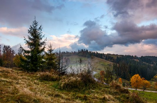 forest on hillside in stormy weather