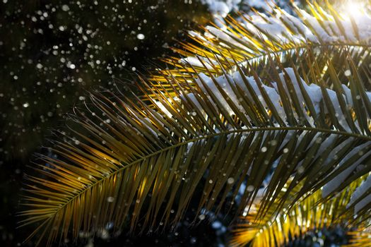 Branch of palm tree covered in snow