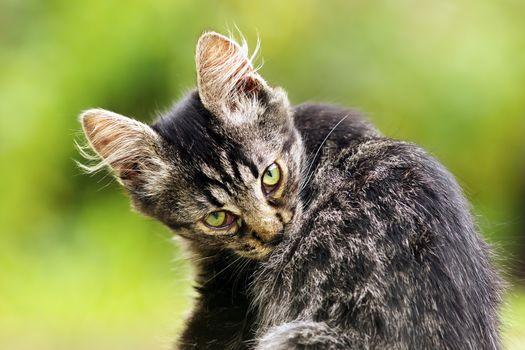 beautiful kitten in the garden
