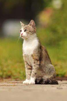 mottled domestic cat standing in the garden
