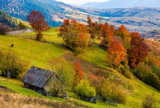 woodshed on grassy hillside with reddish trees