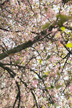 tree in bloom
