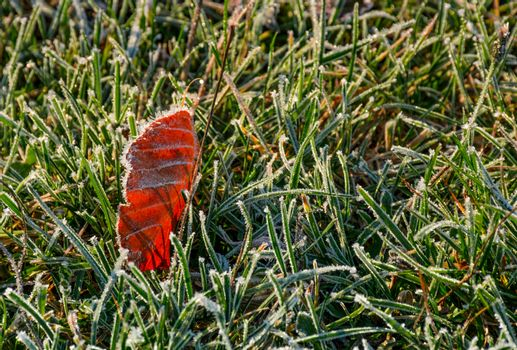 reddish leaf on ground in frosted green grass
