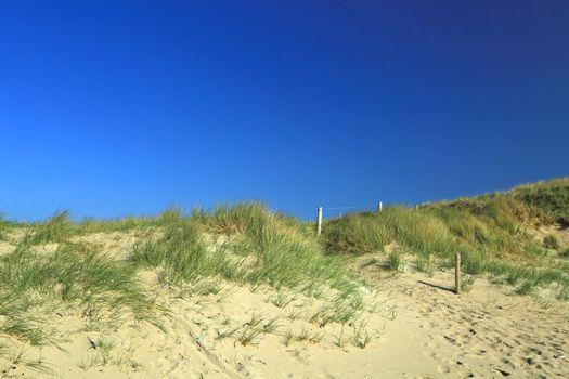 Dune at the Atlantic Ocean
