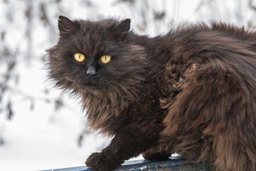 black, shaggy stray cat with yellow eyes