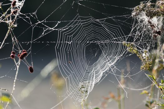 Close-up spiderweb with dew drops