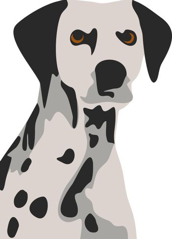 Dalmatian adult dog on white background, simplified vector illustration
