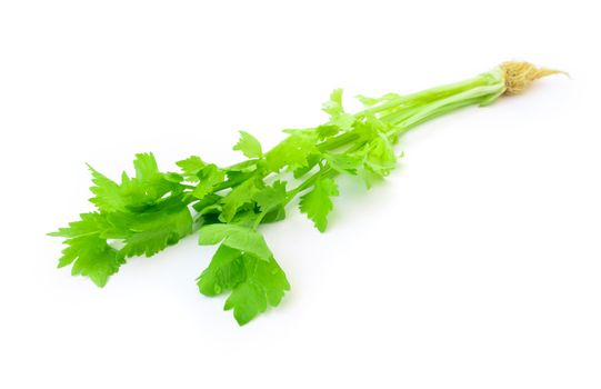 Closeup fresh celery on white background, Raw material for make