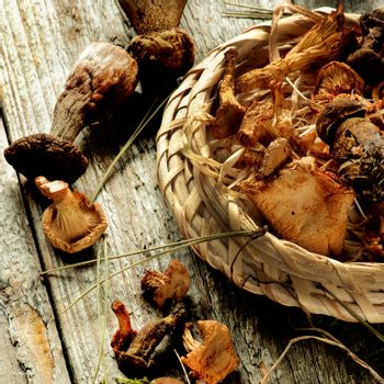 Forest Dried Mushrooms with Chanterelles, Porcini and Dry Stems in Wicker Scoop closeup Rustic Wooden background