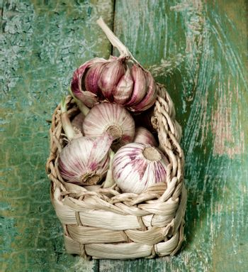 Heap of Fresh Pink Garlic with Green Stems in Wicker Basket closeup on Green Cracked Wooden background