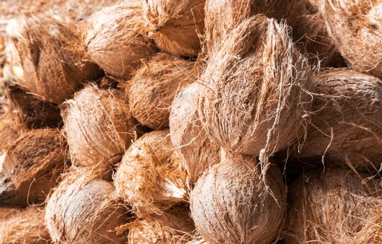 Coconut group raw material for make food and drink, topical frui