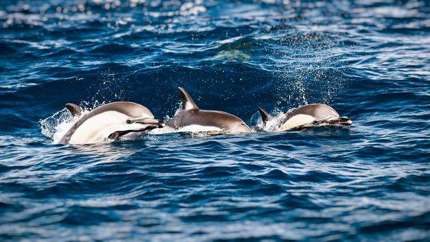 Three beautiful dolphins