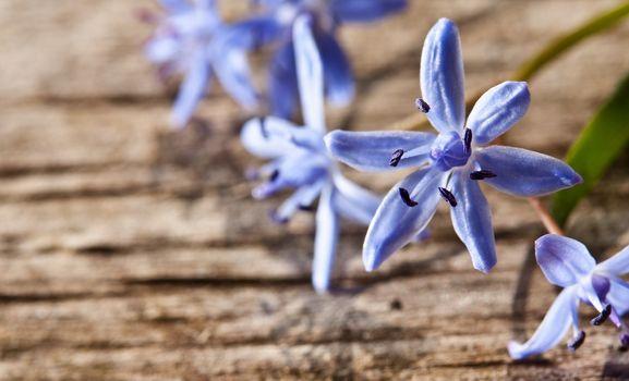 Woodland spring flowers