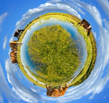 Little planet panorama