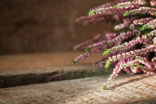 Heather in evening light on wooden background