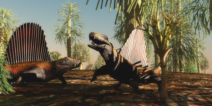 Dimetrodon reptiles have a territorial dispute over which animal is stronger and braver in the Permian Age.