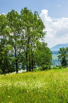 forest glade on hillside