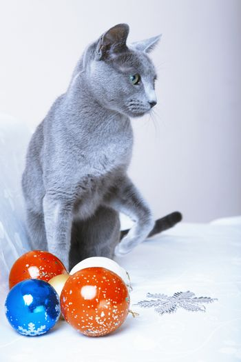 Christmas time for cat